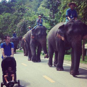 Elephant parade pic